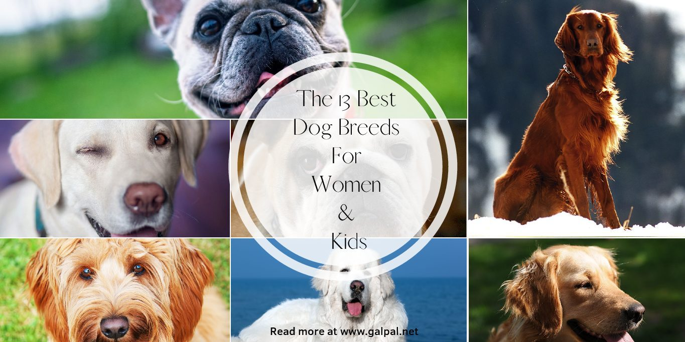 The 13 best dog breeds for women and kids- Family dogs