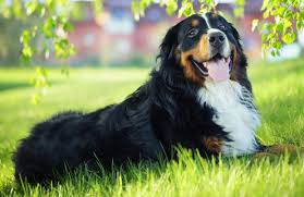 Best Dog Breeds For Kids and Women