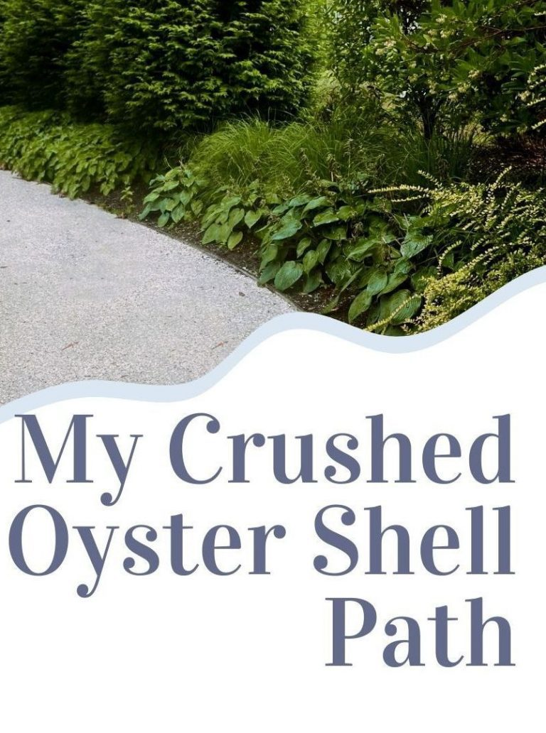my crushed oyster shell path